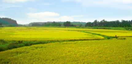 田園風景(絵画風)