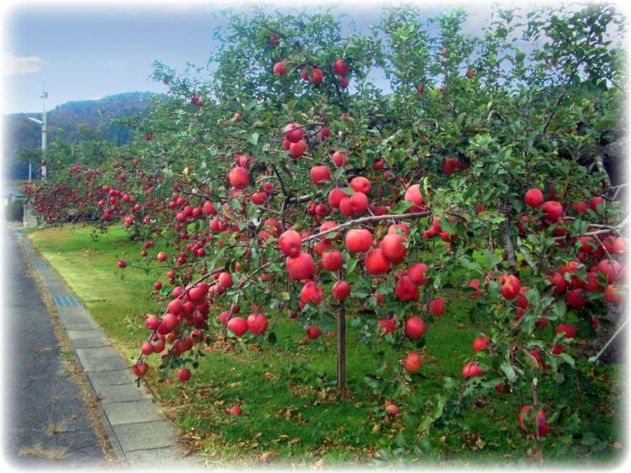 ♪~Apple