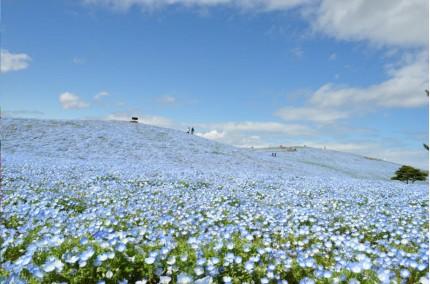みはらしの丘(春)