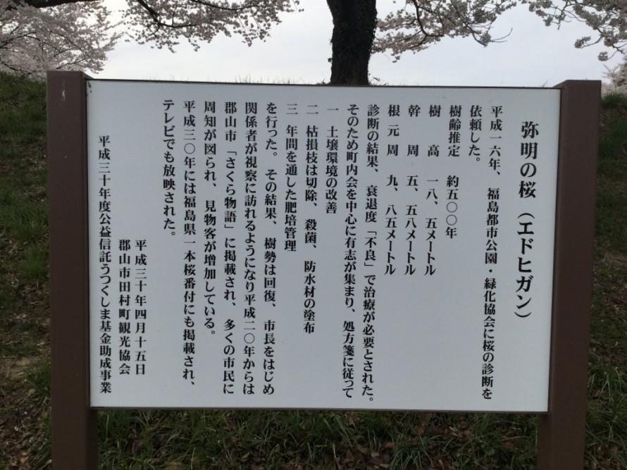 弥明の桜説明
