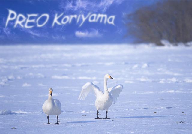雪と白鳥とPREO Koriyama