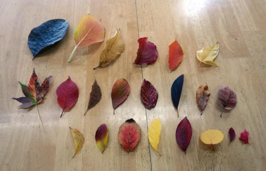 プレオ郡山店の落ち葉