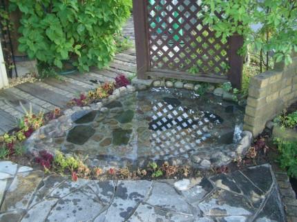 プレオの池~