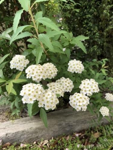 展示場 植物4