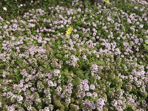 展示場 植物5