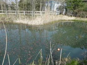 新潟フィールド 湖
