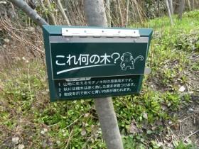 樹木クイズ