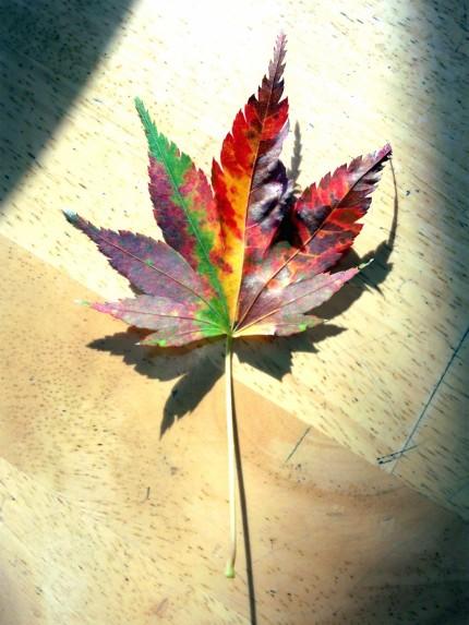 虹色のモミジの落ち葉