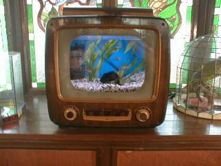 昔のテレビを利用した熱帯魚水槽