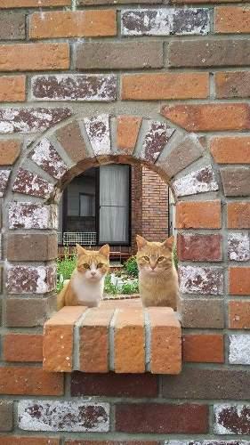 ネコちゃんも「日向ぼっこしやすくなった」と言っています!?